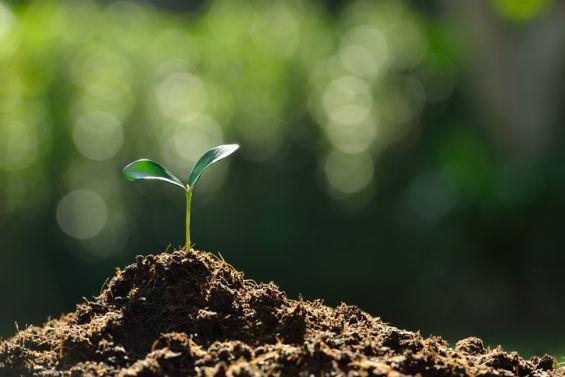 Spring, Blossom, Season, Green, Plant, Soil