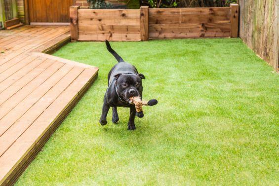 Artificial Grass, Green, Grass, Dog, Pets, Garden